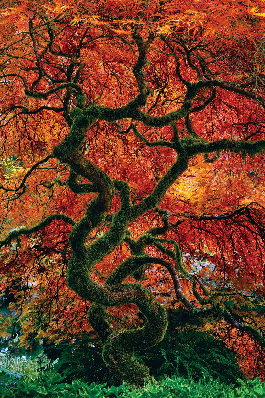 Infinity Tree by Peter Lik Peter lik, Nature photography