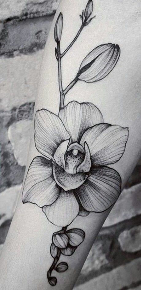 Pin By Dmitrij On Cvety Orchid Flower Tattoos Floral Tattoo Sleeve Orchid Tattoo
