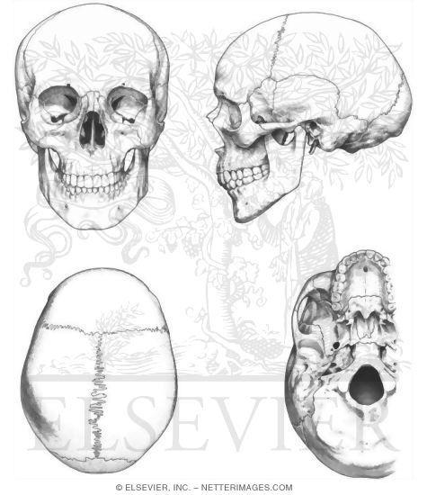 Skull Bones Coloring Pages - Cinebrique