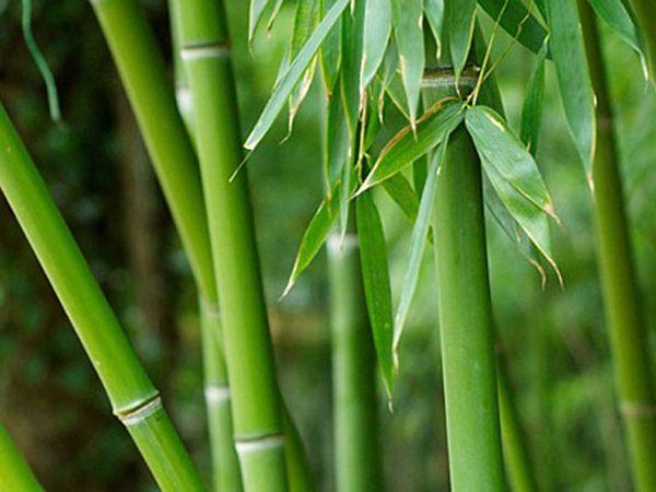 Energia da biomassa yahoo dating 3