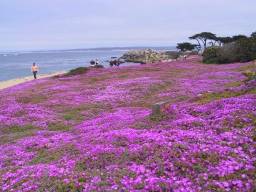 Pin By Carmel Bach Festival On Everyone S Favorite Places Spaces Pebble Beach California Places In California Around The World In 80 Days