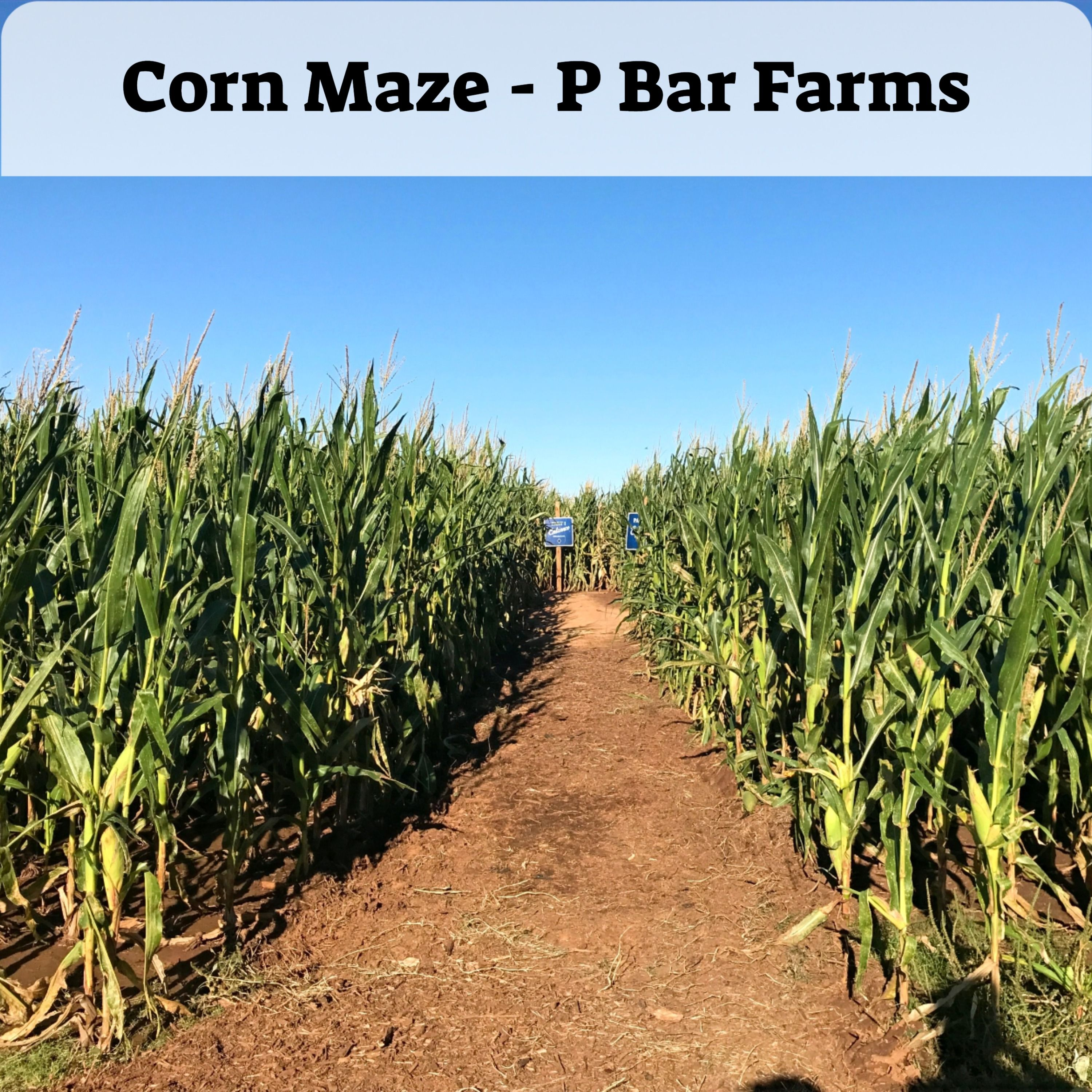 How Much Is It To Get In The Corn Maze