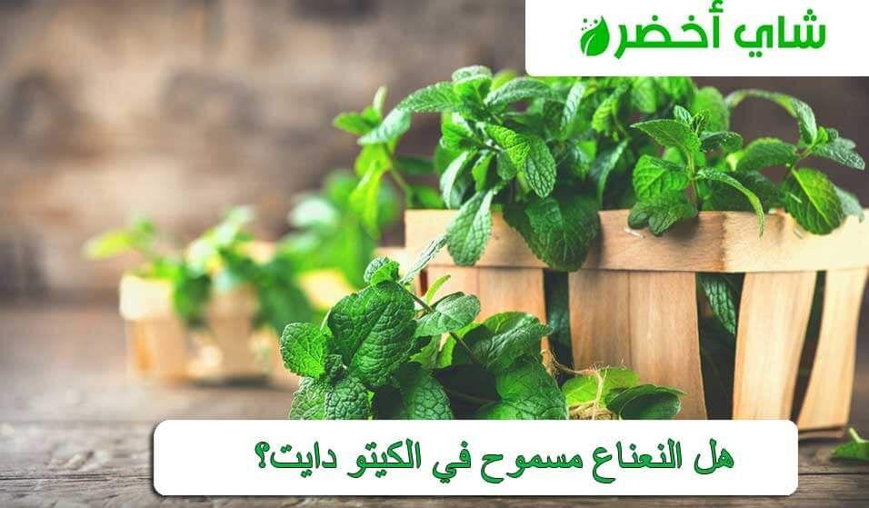 هل النعناع مسموح فى نظام الكيتو In 2021 Herbs Plants Food