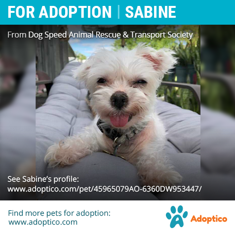 Adorable Pet Sabine On Pet Adoption Dog Adoption Adoption