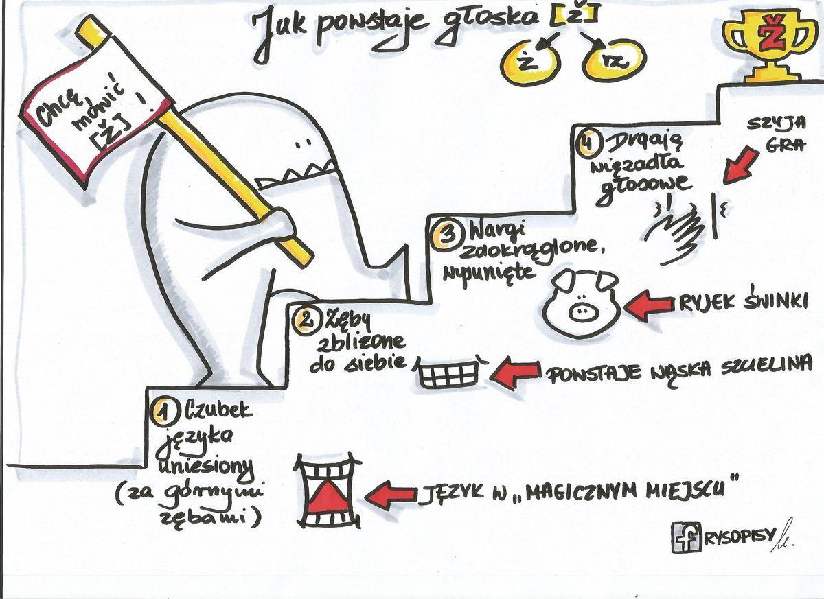 Głoska ż (With images) | Terapia mowy