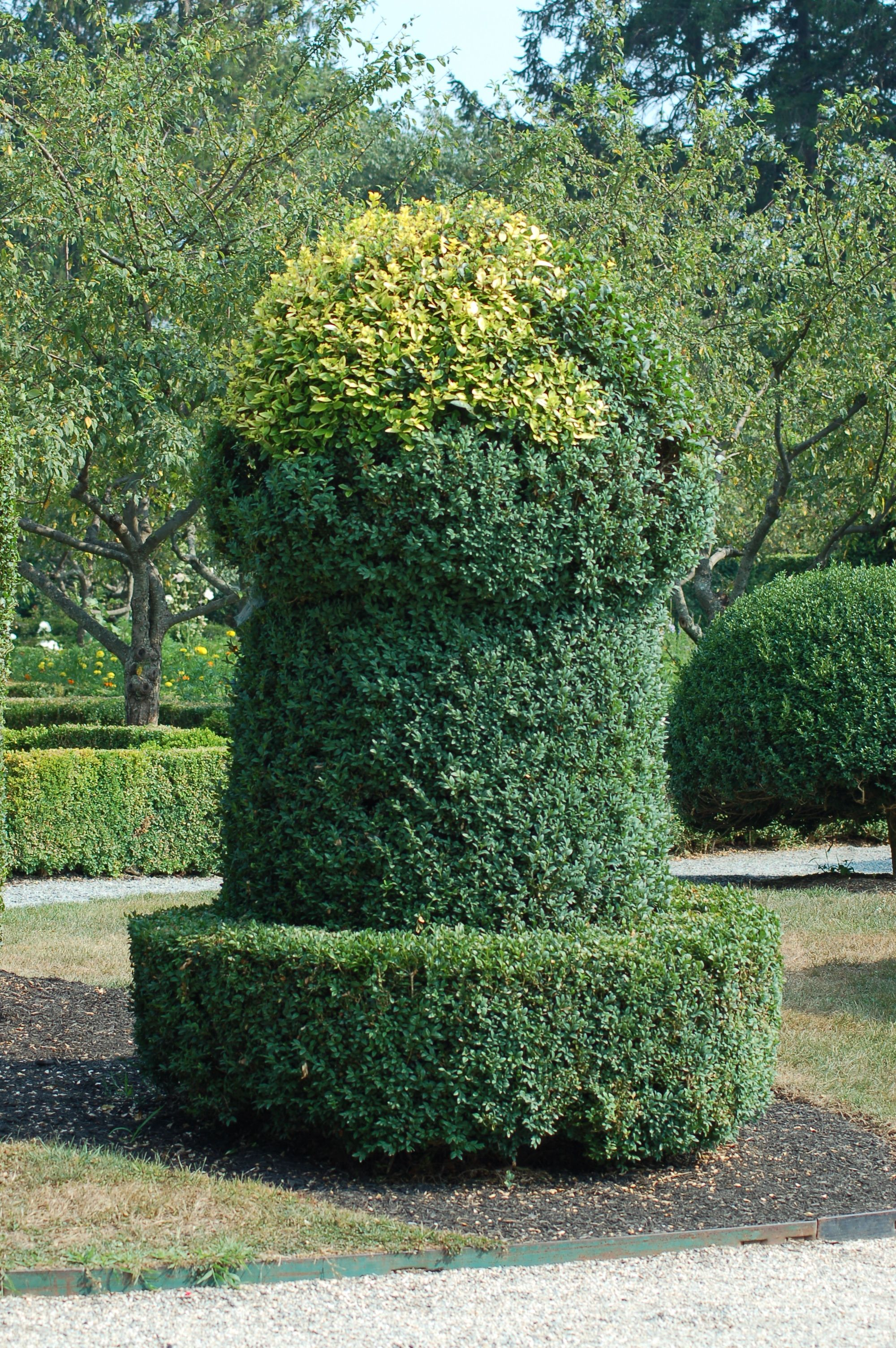 what is a shrub topiary gardens garden landscaping and shrub