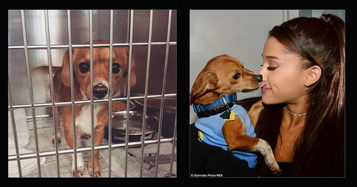 Badass Vegan, Ariana Grande, is Helping 15 NYC Rescue Dogs