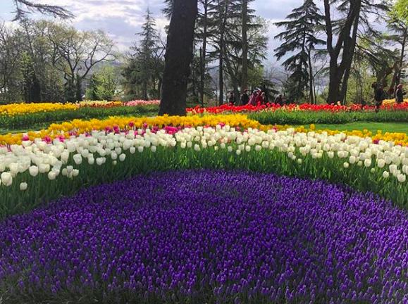 Foto Taman Bunga Tulip Di Belanda