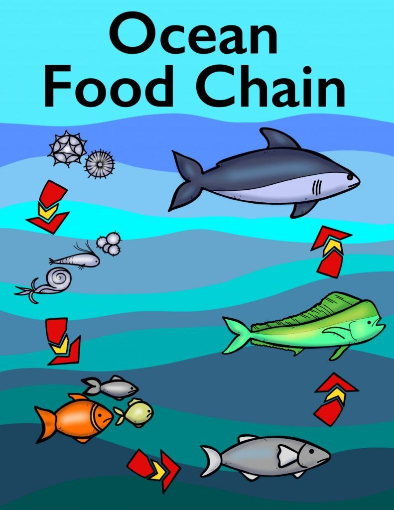 Ocean Food Chain Colouring Book Thrifty Mommas Tips Ocean Food Chain Food Chain Ocean Food [ 1024 x 791 Pixel ]