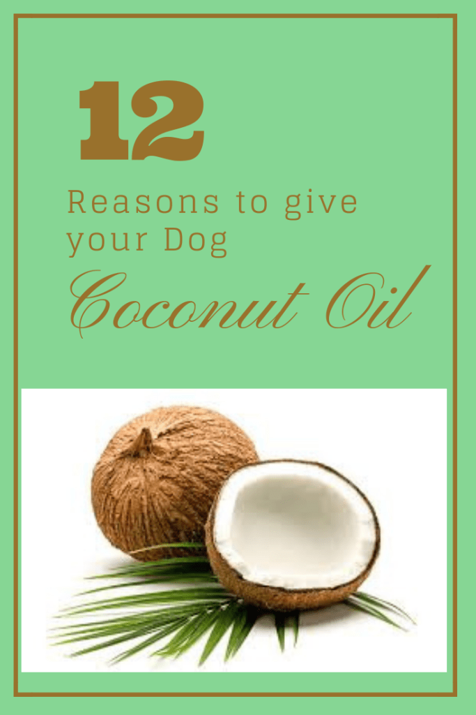 12 Incredible Reasons To Give Your Dog Coconut Oil (With ...