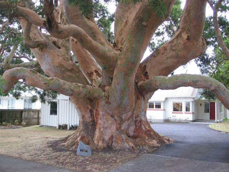 A Unique Record Of The Notable Trees Of New Zealand Tree Australian Native Garden Plants