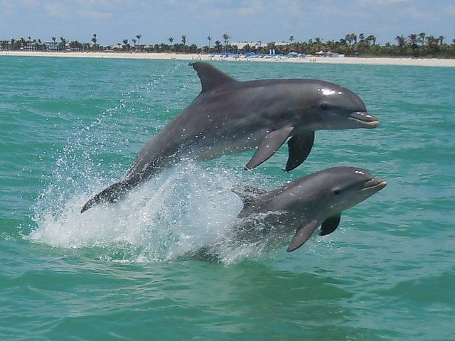 Animals On Instagram Mamma And Baby Tag A Friend Baby Dolphins Marine Animals Dolphins
