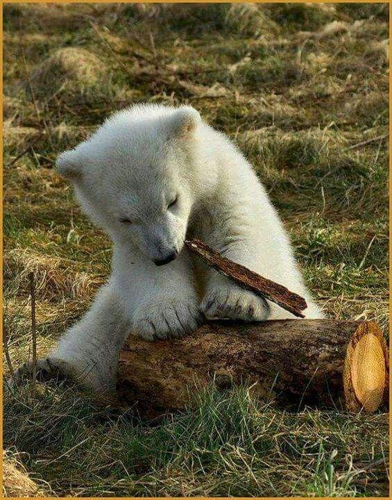 「Cute」おしゃれまとめの人気アイデア|Pinterest|Gemema シロクマ, 動物, 可愛い 動物
