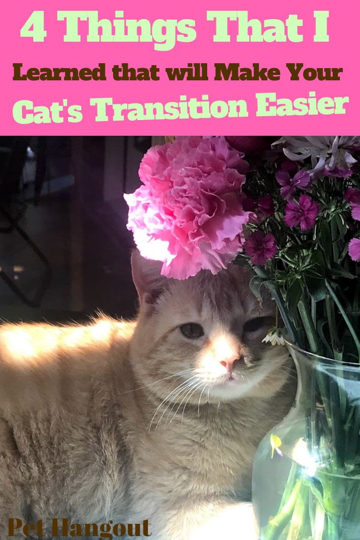 4 Things I Learned That Will Make Your Cat S Transition Easier Cats Cats Outside Inside Cat