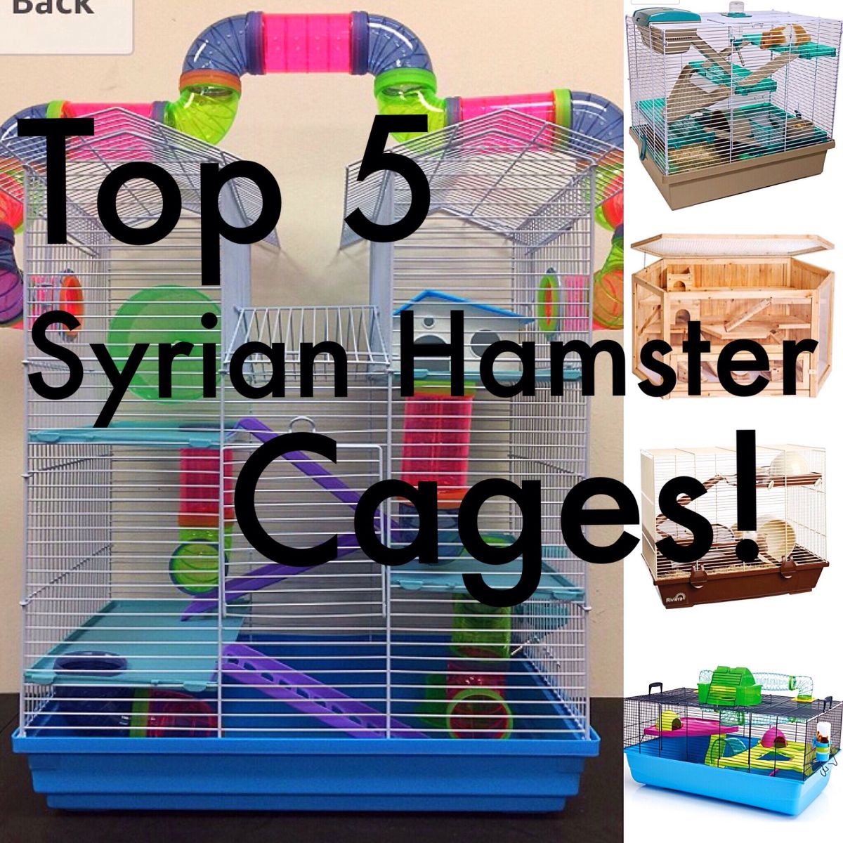 Best Cages For A Syrian Hamster Syrian Hamster Hamster Cages