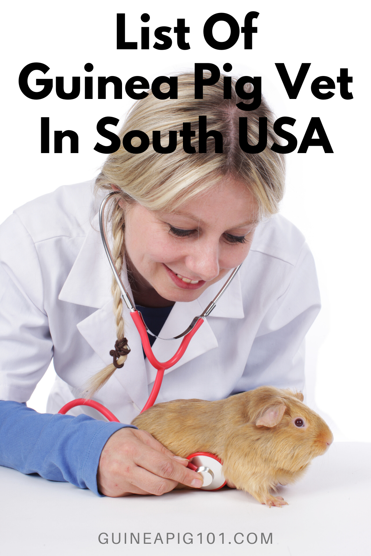 Pin on Guinea Pig health Post Pet treatment Pet blog