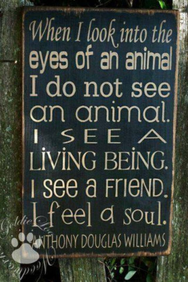 I Love Animals More Than Humans Inspirational Quotes Animals