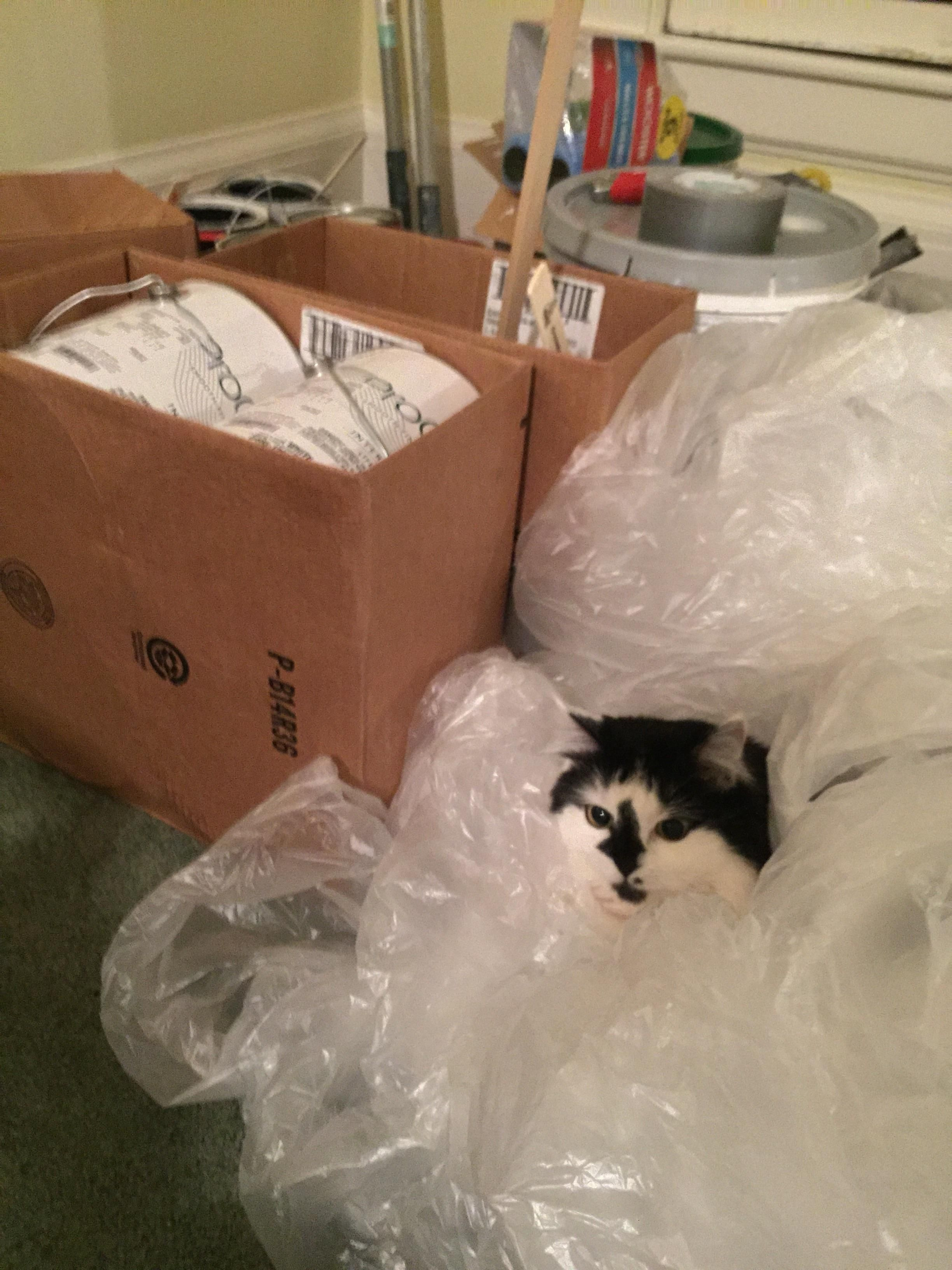 My Cat Has Crawled Into Plastic We Used Covering Furniture While Painting Https