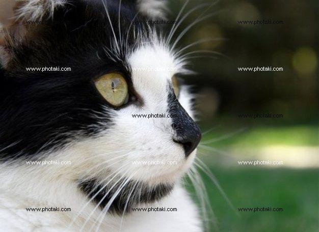 http://www.photaki.com/picture-cat_1193782.htm