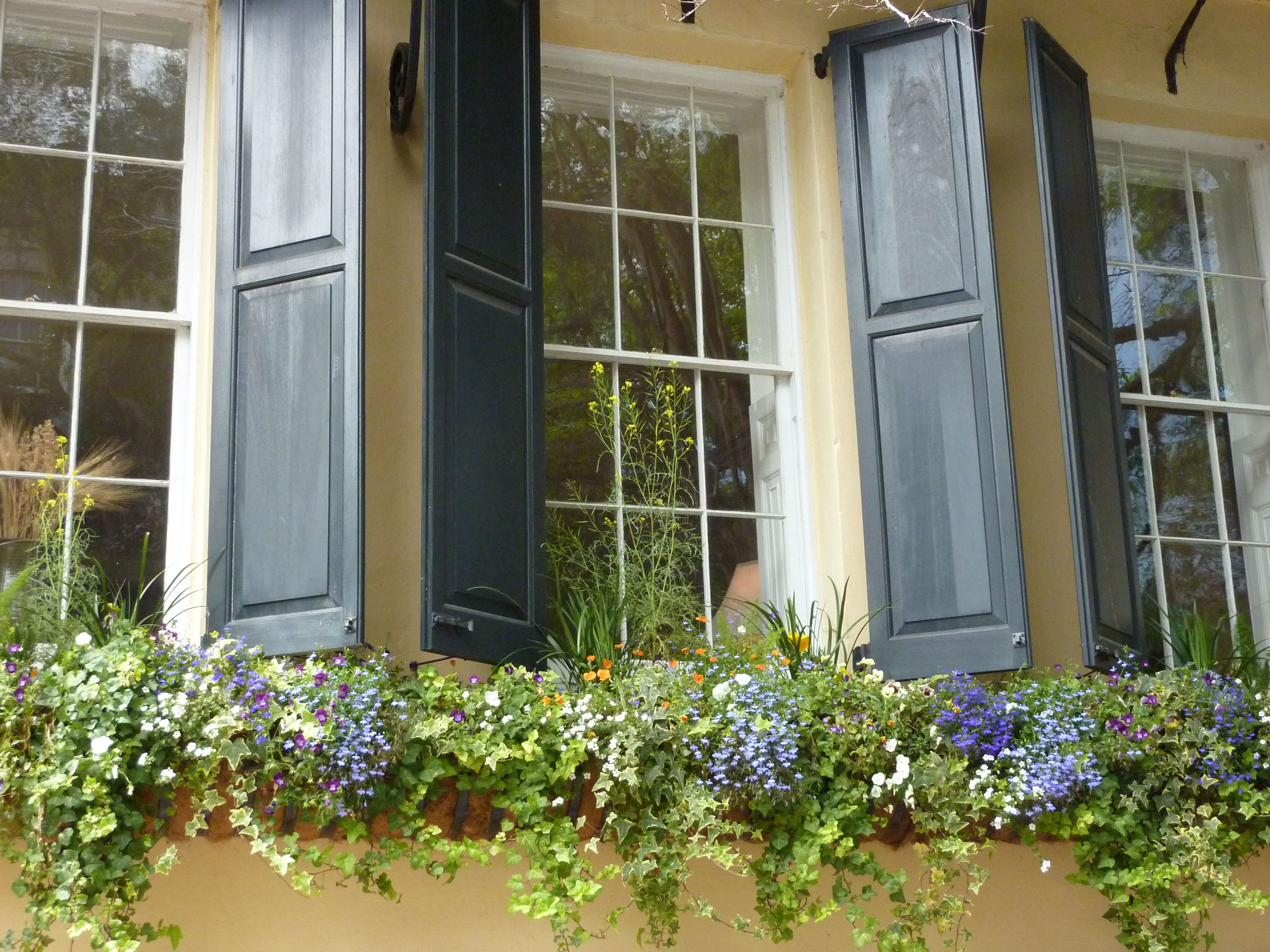 Happy Window Boxes Greet The Morning Sun Notice Those Real
