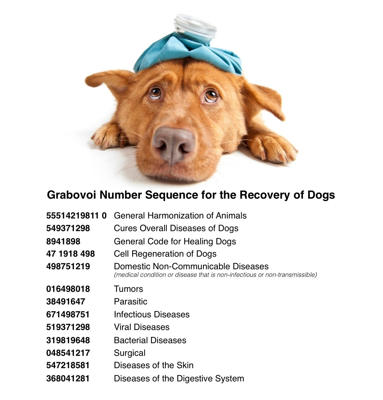 Grabovoi Number Sequence for the Recovery of Dogs.
