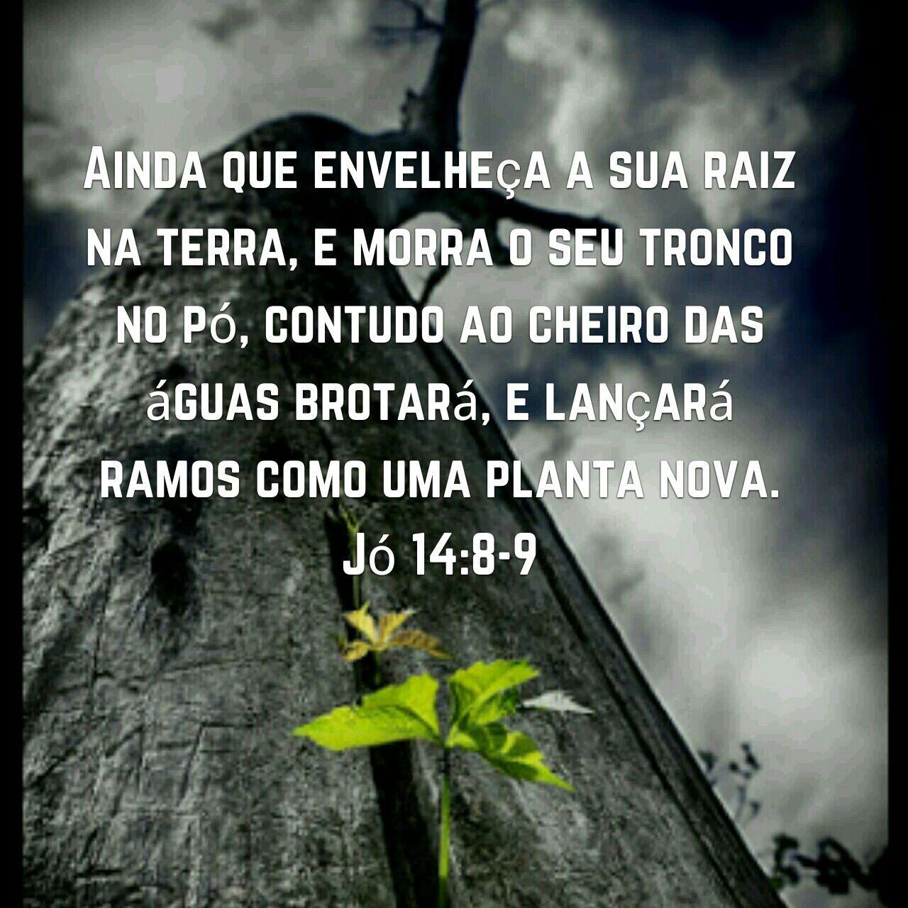 Jo 14 8 9 Com Imagens Palavra De Deus Palavra Ao Cheiro Das