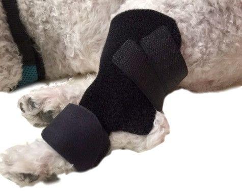 dog hock protectorkeepdoggiesafecom doggie safe dogs vet medicine protector