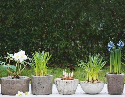 decoración de plantas con piedras | crea tus propias macetas con