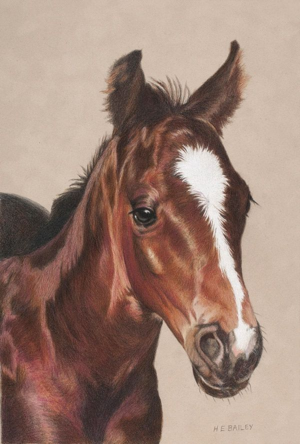 Hello World Colored Pencil Helen Bailey Horses Equine Artwork