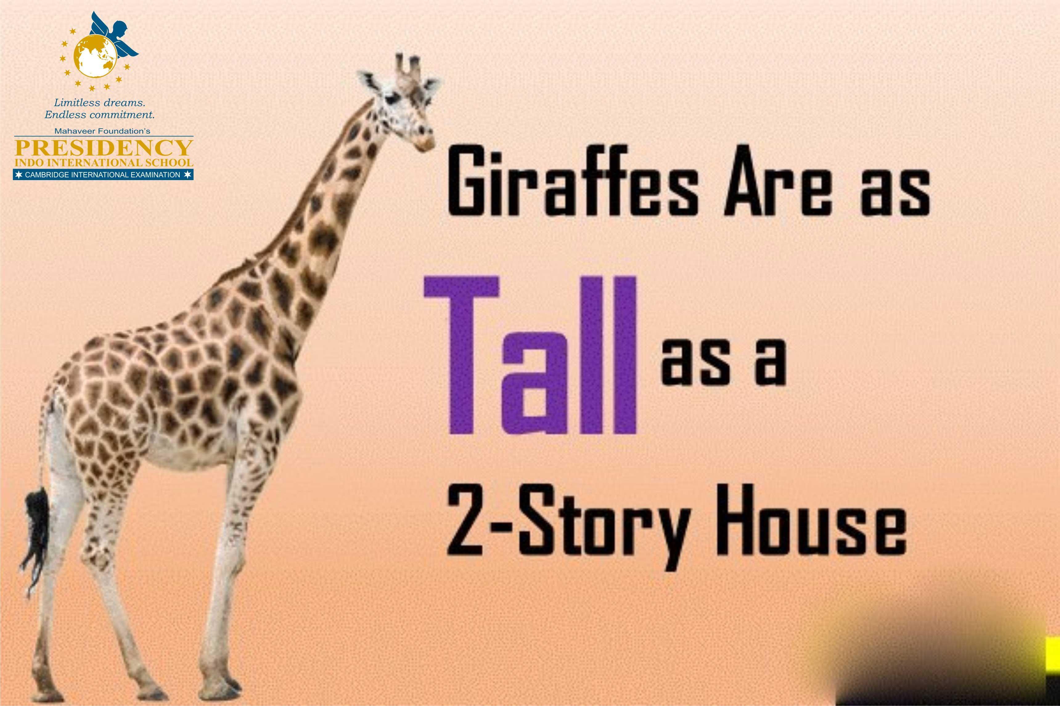 Fact Of Giraffe Giraffe Are As Tall As 2 Story House
