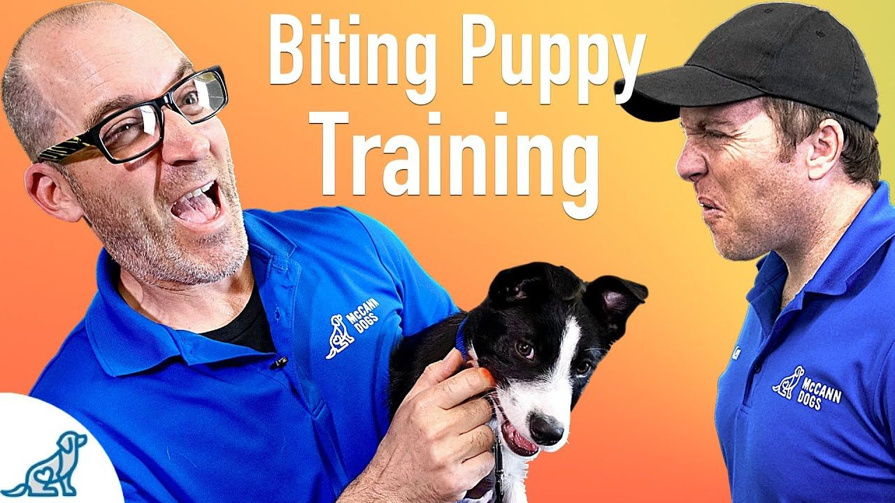 How To Prevent Your Puppy From Biting Professional Dog Training