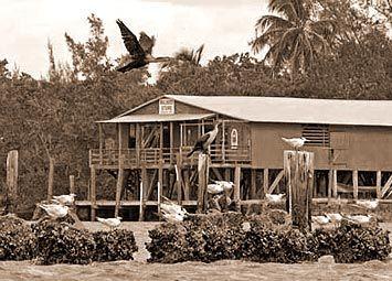 Garden of Eden in Bristol, Florida | Florida travel ...