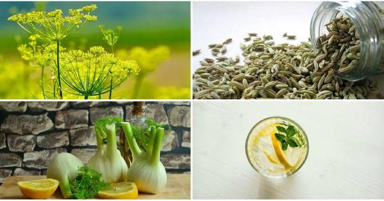 فوائد الشمرة عظيمة منها تحسين الهضم وطرد الغازات و منظم هرموني في حالة الحيض المؤلم Glass Vase Vegetables Vase