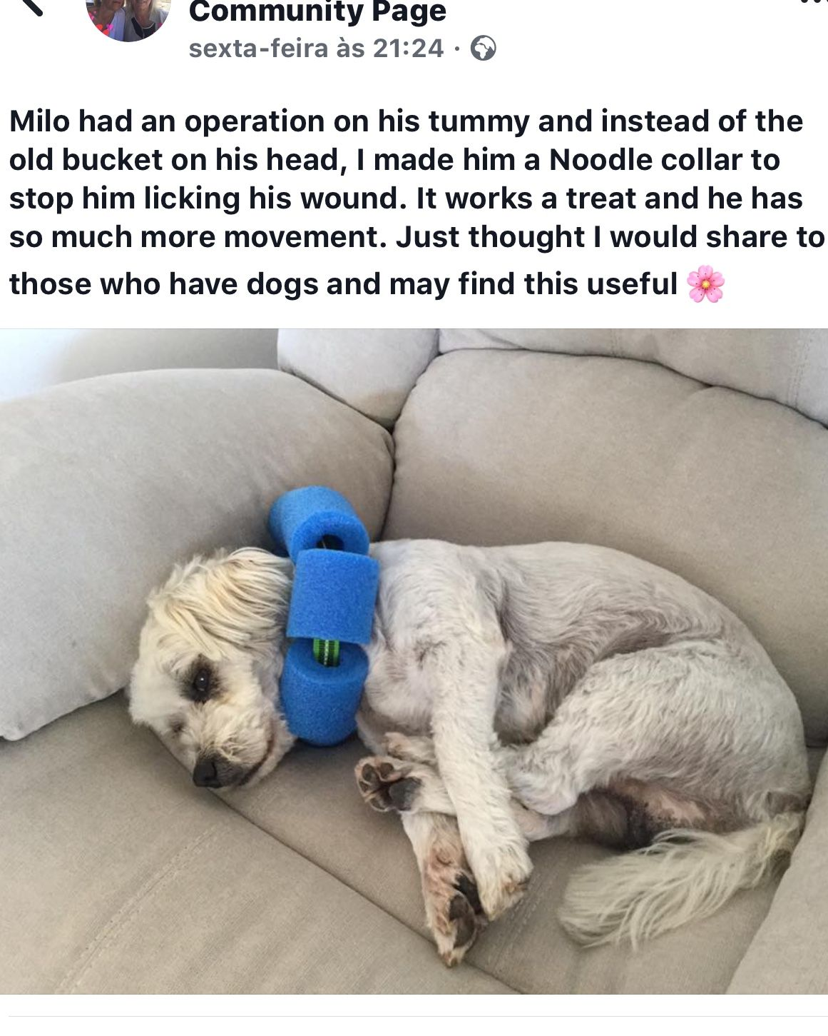Noodle Necklace For Dogs After Surgery Brilliant Dogs Dog