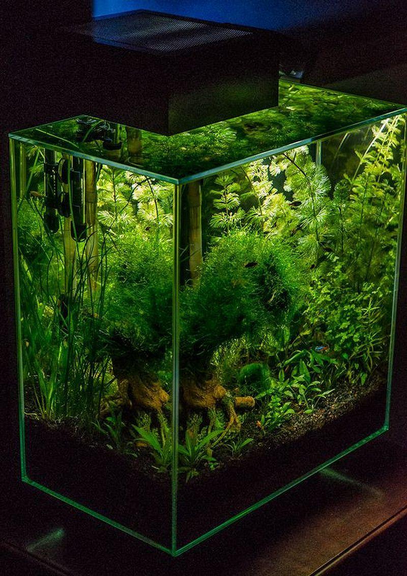 50+ Stunning Aquarium Design Ideas for Indoor Decorations ...