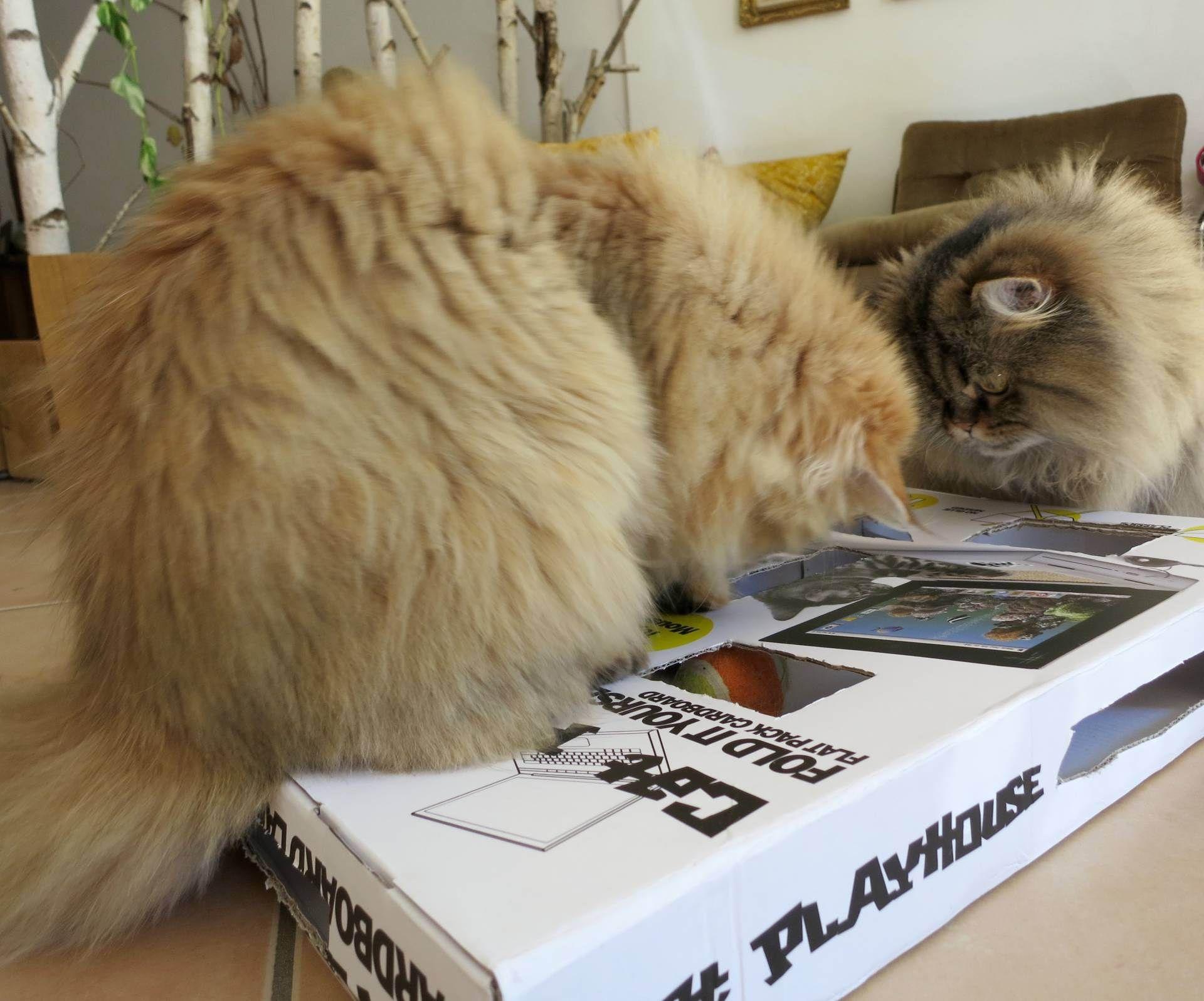 DIY Cardboard Treat Puzzle Diy cat treats, Cat furniture