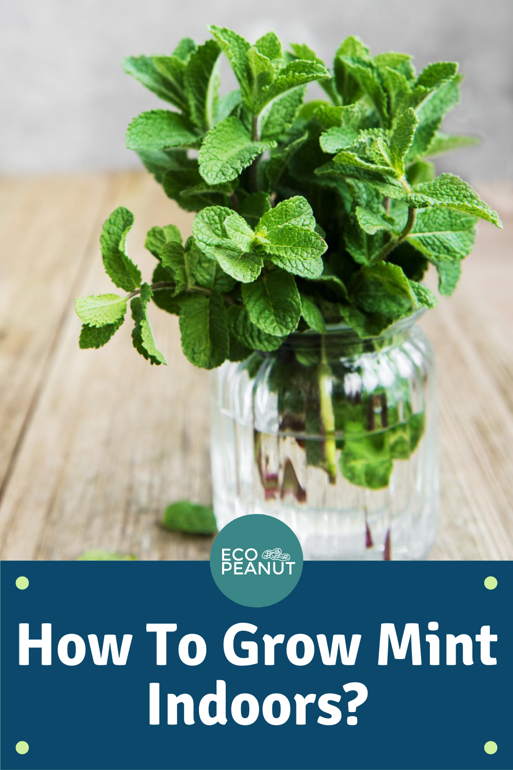 How To Grow Mint Indoors The Easy And Simple Way Eco Peanut In 2020 Growing Mint Growing Mint Indoors Mint