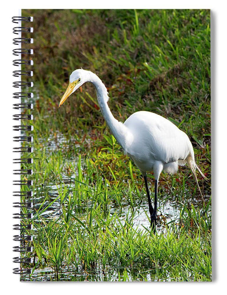 Great Egret On Prowl >> William Tasker Spiral Notebook Featuring The Photograph Great Egret