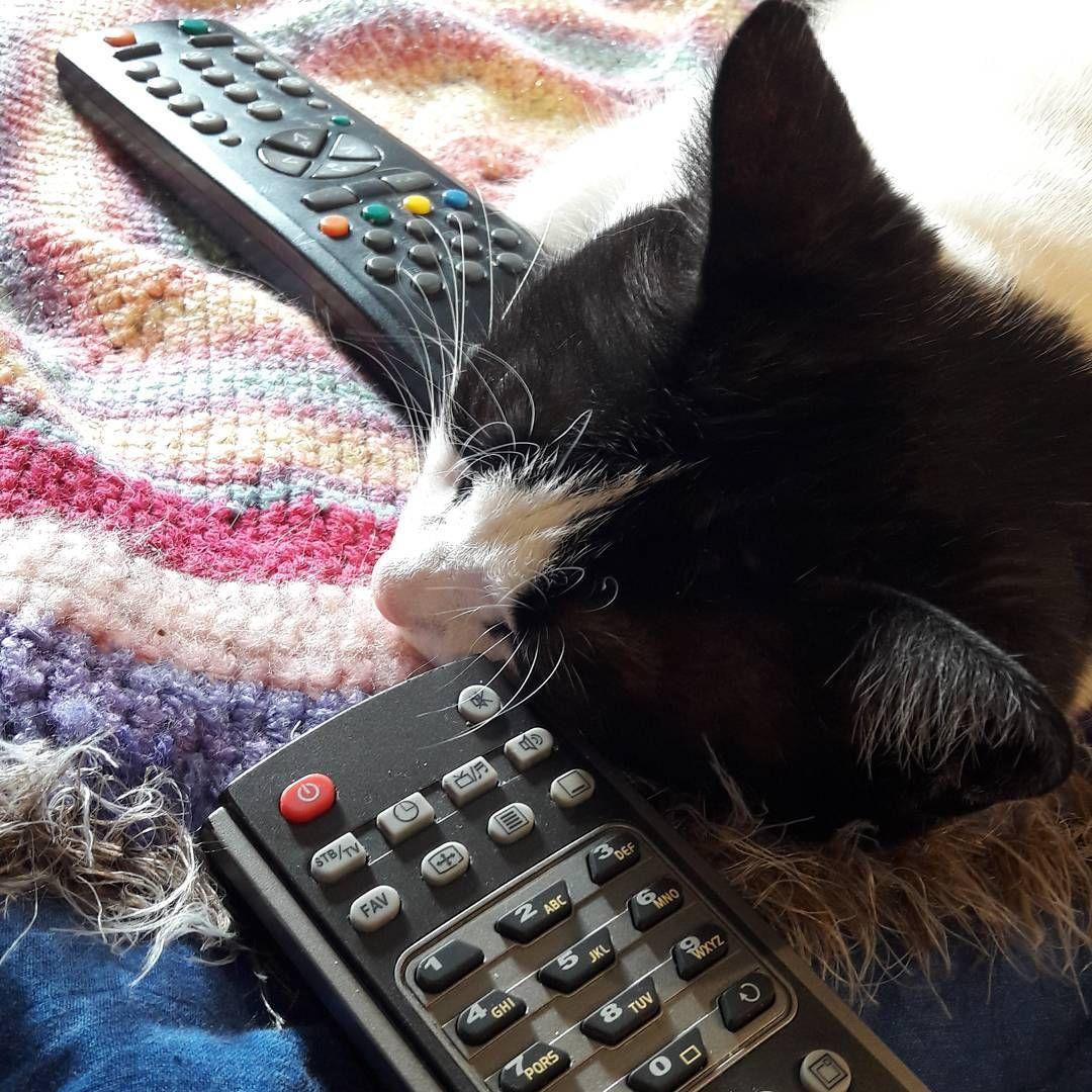 kuka teillä päättää mitä kanavaa katsotaan? #töllö #elsa http://misstagram.com/ipost/1540824983886344812/?code=BViHCjBl7Js