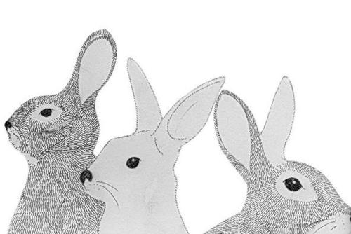 bunnyes