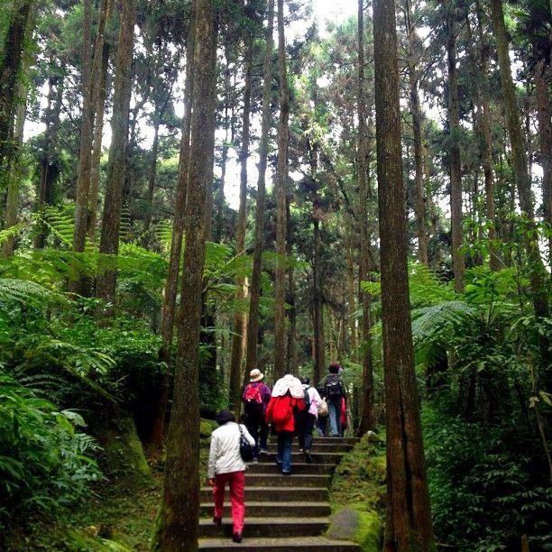 溪頭森林遊樂區 Xitou Nature Education Area in 南投縣 http://www.exfo.ntu.edu.tw/sitou/cht/ 南投縣鹿谷鄉森林巷9號