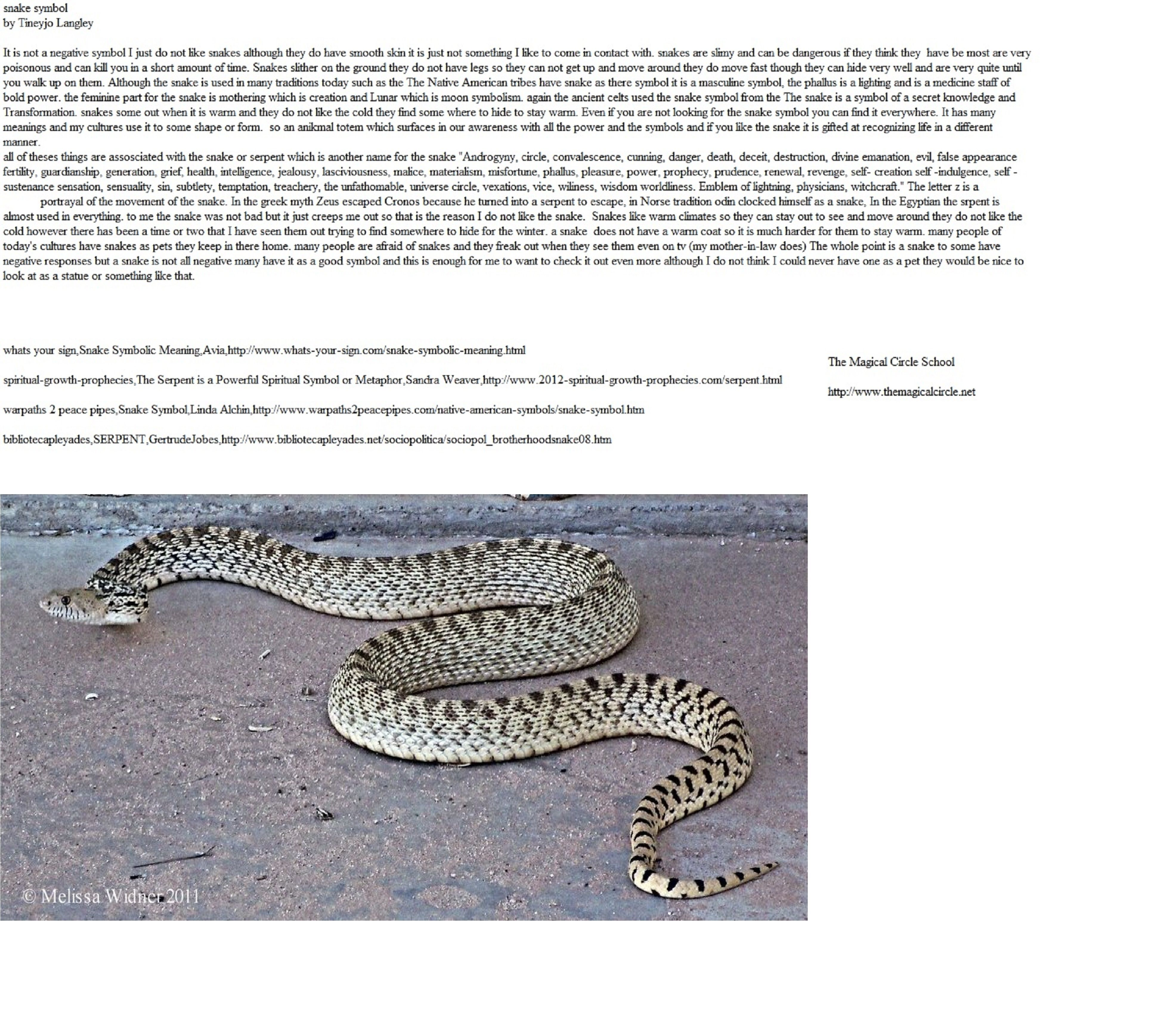 A snake and how it is misunderstood The Magical Circle