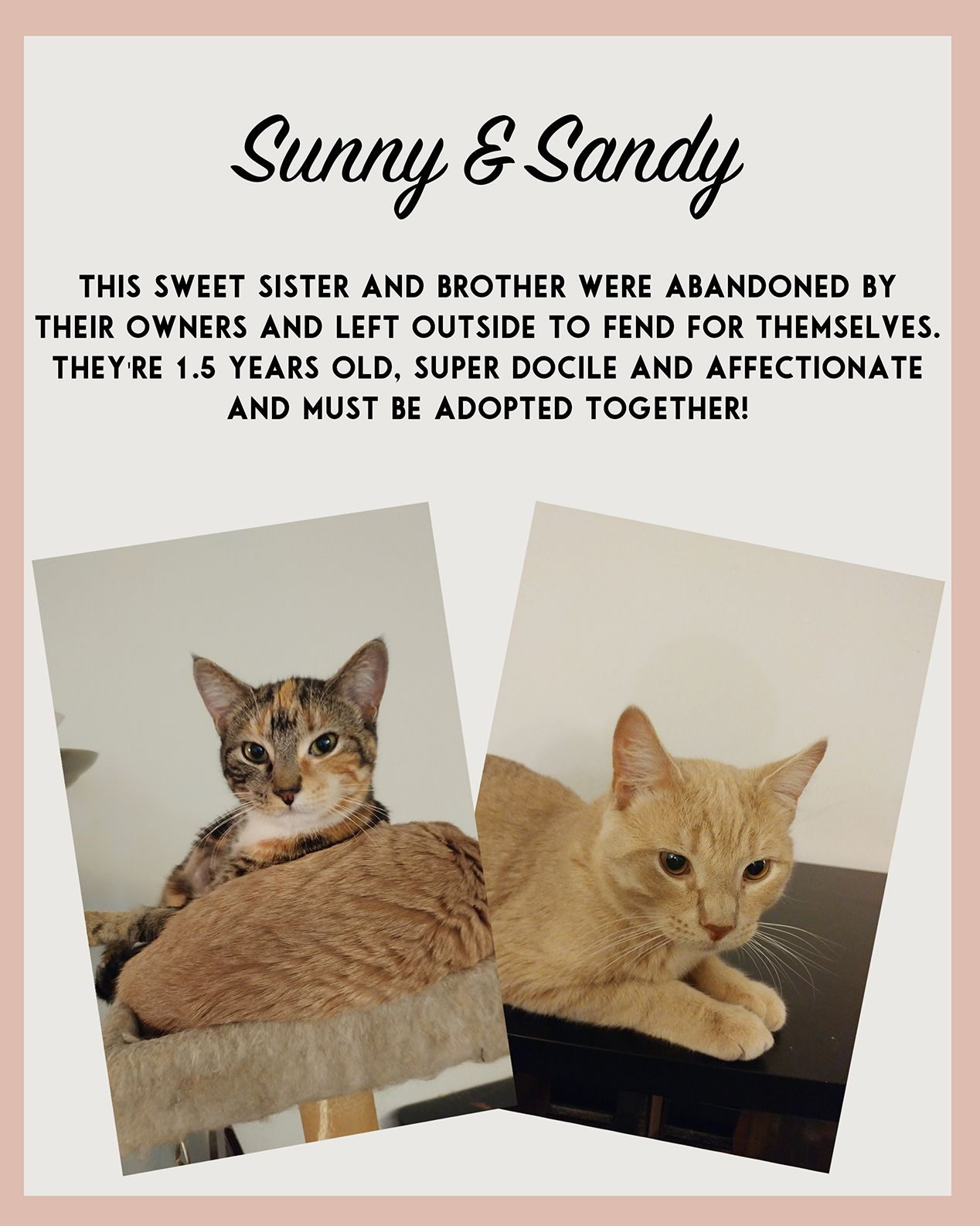 Sunny and Sandy need adopting! Meows, Adoption, 5 year olds
