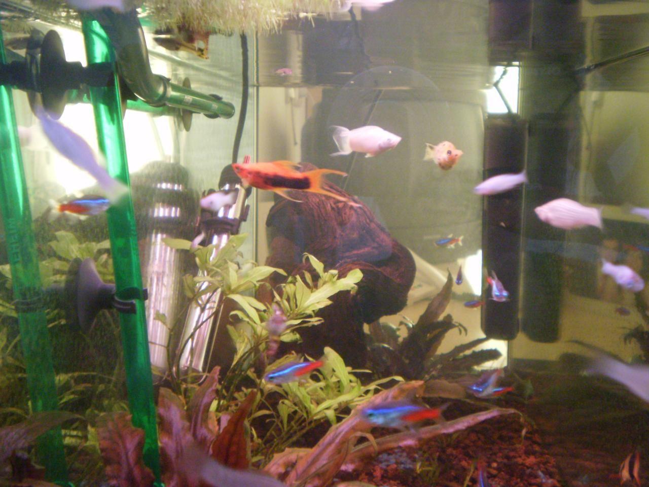 Regalo peces tropicales estepona m laga acuario vista for Temperatura para peces tropicales acuario