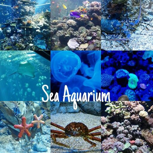 Sea Aquarium today :)