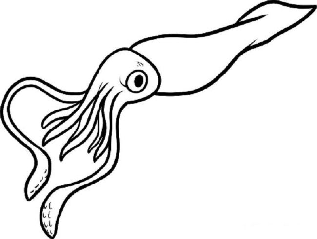 Squid Coloring Pages Sea Creatures Drawing Squid Drawing Giant