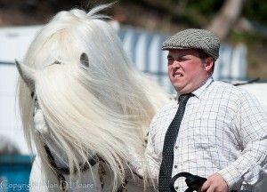 Q Horse Names HORSE NAMES THAT START...
