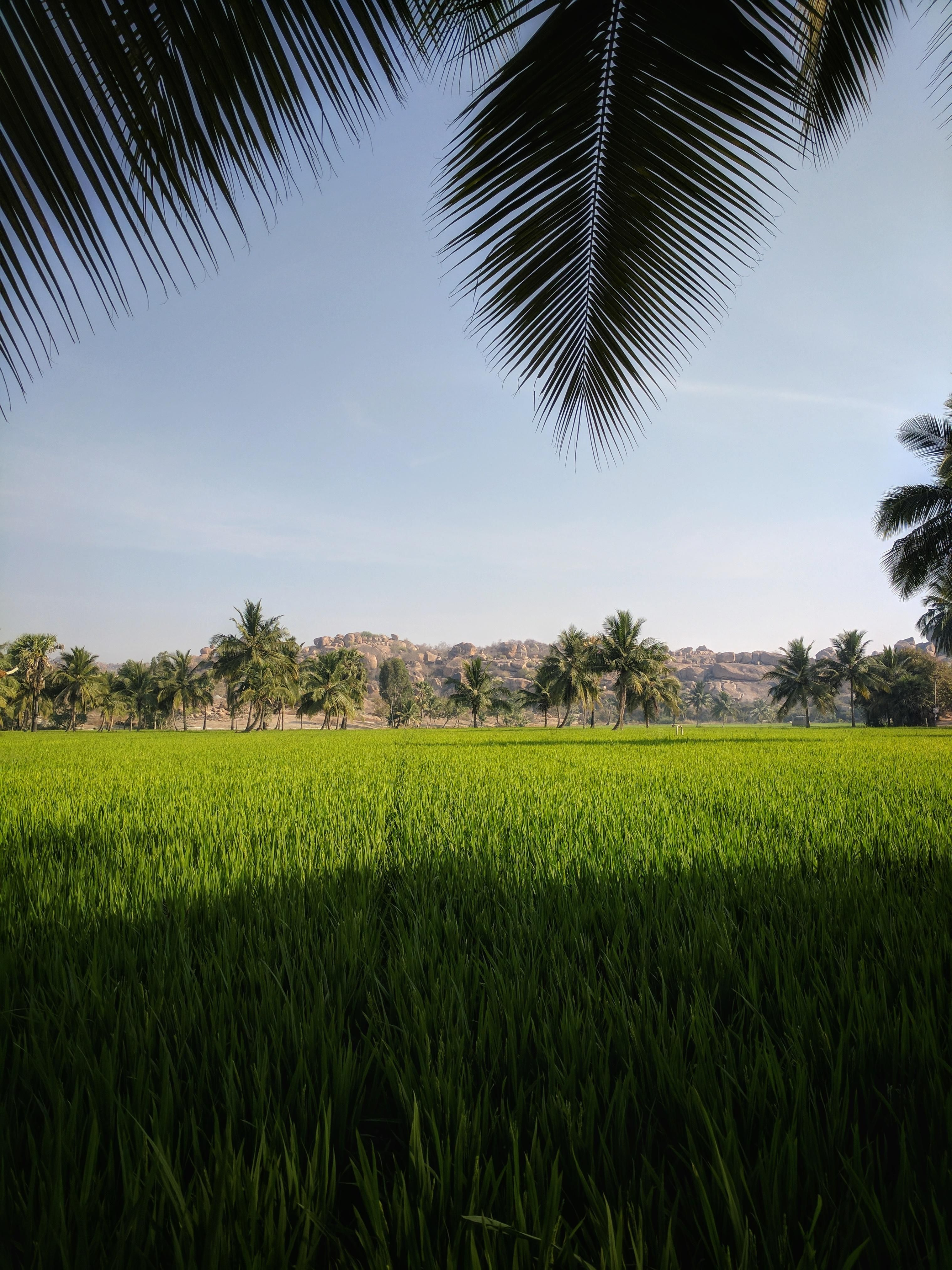 Paddy Fields In Hampi An Ancient Village In South Indian State Of Karnataka 3036 X 4048 Oc Https Village Photography Landscape Photography Indian Village