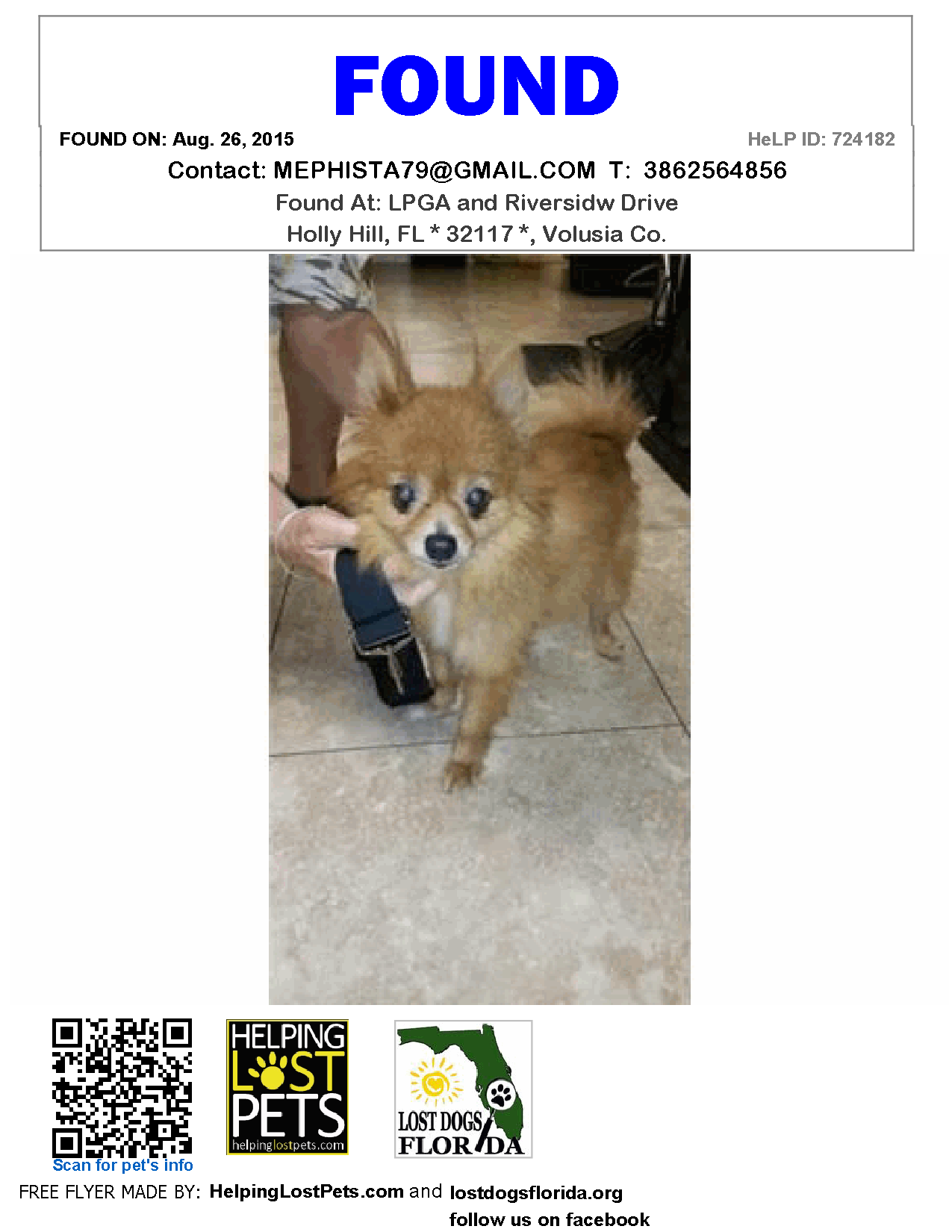 Found Dog Pomeranian Holly Hill Fl United States Dogs