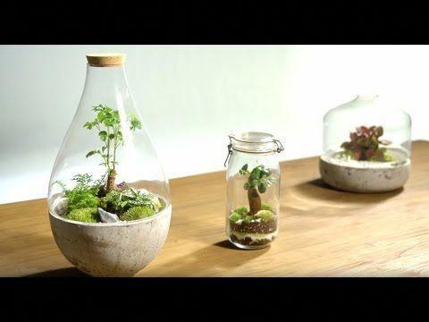 Diy Garden In A Jar Eternal Green Terrarium Youtube